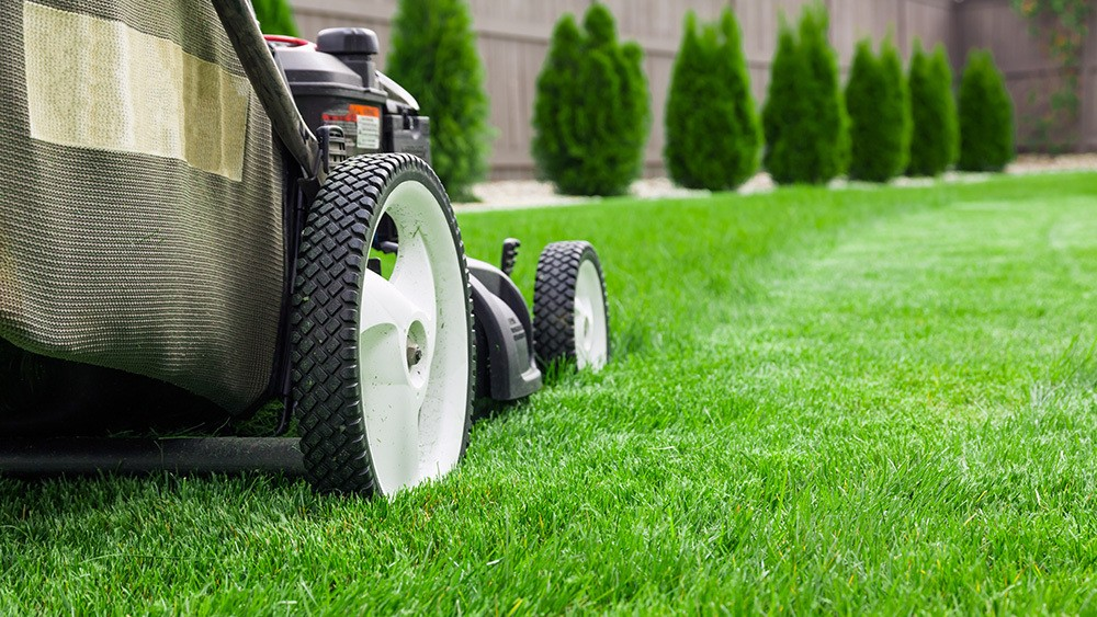 5 Lawn Care Tips for Beginners